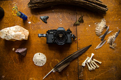 Changing with the Seasons (canaan.farmer) Tags: camera vintage antique old film ricoh japan japanese nature feather bone insect butterfly flower stone rock mineral arkansas quartz wood drift log tree branch cypress knee skull owl lens retro sand dollar beach ocean sea shark tooth teeth bottle kr5 desk