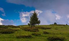 tree (lorenzapanizza) Tags: tree albero nature green landscapephotography latemar
