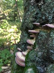 Forest (ekaterinakomarova) Tags: moss wood mushroom forest green texture nature