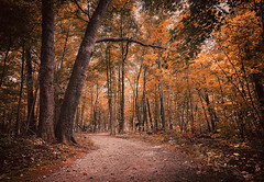 Lost in Autumn (Anthonypresley1) Tags: marengo illinois anthony presley anthonypresley autumn landscape nature tree trees leaf leaves grass dirt red orange gold old retro vintage
