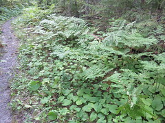 Voyageurs National Park Flora (Saint Louis County, Minnesota) (courthouselover) Tags: minnesota mn saintlouiscounty stlouiscounty voyageursnationalpark nationalparks nationalparksystem northamerica unitedstates us