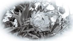 Basket of flowers (Brenda Boisvert ..) Tags: m g
