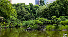 Hibiya park 8 (ZKent.Yousif) Tags: chiyodaku tkyto japan jp  chku  minatoku canon sigma sigma1750mm 50mm streetphotography street park parks