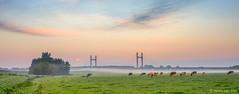 Harvest moon at sunrise ( Jenco van Zalk) Tags: moon full kampen netherlands overijssel molenbrug mist fog cows rural nature landscape sunrise