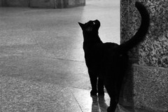 The guardian (kiichan20) Tags: cat gatto blackcat gattonero cimitero cementery monumentale milano milan