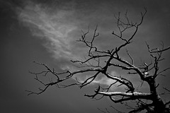 I Got Fire Under My Feet (Anna Kwa) Tags: tree branches sky clouds shenandoahnationalpark virginia usa annakwa nikon d750 afsnikkor70200mmf28gedvrii my fire heartbeat always lightning thunder chains wings travel world seeing heat soul throughmylens