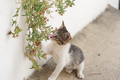 DSC00414 (Shiriru) Tags: animals cat dog mouse     cute kawaii  2016 portugal beauty cuteness