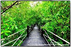 Mangrove forest Chonburi tour by naturenote_E12461014-020