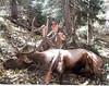 New Mexico Elk Hunt 51