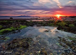 Sunset Beyond The Seaweed