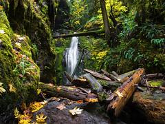 Trestle creek falls (JSB PHOTOGRAPHS) Tags: trestle oregon creek nikon grove cottage falls waterfalls coolpix p7100 dscn8665