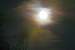 Moon (Daniel J. Mueller) Tags: moon tree night clouds switzerland mond nacht branches wolken full ste baum vollmond d4
