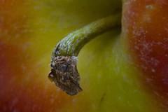 Altern... (Uwe58) Tags: macro frucht apfel
