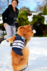 He's fast but not fast enough. (A&A Photography Services) Tags: bear new dog snow storm cute puppy happy nikon dof bokeh sandy hurricane nj boo shore worlds jersey pomeranian jerseyshore cutest f28 1755mm d7000