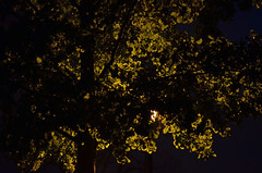 Light and Shadow (david.l.goodwin) Tags: light columbus shadow ohio white abstract black tree green nature leaves night contrast 50mm darkness ohiostate nighttimephotography offcampus