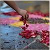 Scented moments (Nespyxel) Tags: flowers fall rose 50mm petals nikon colours hand bokeh f14 mano moment fiori petali colori preparation scented gesto sfuocato preparazione istant nespyxel stefanoscarselli caduda