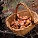 Aquest any, sí !!!! -  (+_+) - La cesta de rovellons