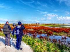 Watch The Birdie (1) (dogmarten28) Tags: autumn england sunshine norfolk telescope naturereserve marsh eastanglia freshwater birdwatchers titchwell rspb twitchers parrinderhide dogmarten28