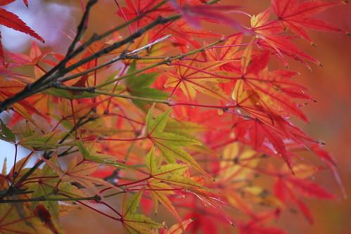 いろどりの秋