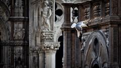 Entre palacios / Between palaces
