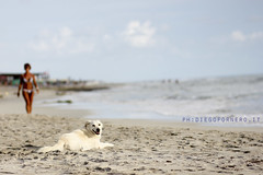 untitled (diegofornero (destino2003)) Tags: dog beach cane salento