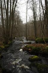 Vramsån stream (magnusfranklin) Tags: winter wild cold vertical rural forest skåne stream sweden bare rapid waterway unspoilt rickarum vramsån