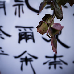 Autumn Poetry (jacob schere [in the 03 strategically planning]) Tags: autumn blur macro fall leaves japan wall closeup digital square japanese tokyo poetry dof bokeh jacob text 4 vine outoffocus autumnleaves depthoffield communication changing kanji chiba sing gr magnified lucid iv ricoh pon ichikawa m2c schere  dgr jacobschere lucidcommunication