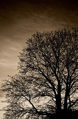 Burnished Beauty   .........Taken with the Nikon 24-70mm f2.8 lens (imageClear) Tags: sunset sky tree nature beauty silhouette sepia wisconsin lens nikon peace natural branches trunk serene nikkor sheboygan burnished nikon2470 nikon2470mmf28 d7000