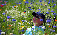 Field of Dreams (Simon Downham) Tags: boy summer sun floral sunshine garden wonder glasses amazing flora pretty little dream meadow july surreal shades halcyon cap dreams stunning wildflowers boyhood 2012 fieldofdreams halcyondays dsc4666acrdx