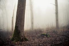Solitude Standing (derScheuch) Tags: trees mist nature fog geotagged 50mm licht nebel minolta f14 sony natur alpha wald bume baum 900 oldenburg dunst ammerland lichtung wildenloh bume friedrichsfeh geo:lat=5312609676499331 geo:lon=8119733333587646