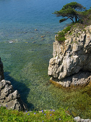 seaside korean pine rock bay (Maxim Tupikov) Tags: ocean park wood blue camping trees sea summer sky mountain flower green beach nature water grass sunshine rock pine rural forest landscape japanese freedom coast countryside rocks paradise natural hiking stones space rustic meadow violet deep conservation environmental wave sunny hidden oxygen korean evergreen serenity vegetation transparent hillside habitat eternity pure preserve coniferous preservation firs protected ecotourism