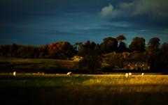 farm (Ray Byrne) Tags: field sheep farm alnwick northumberland pasture raybyrne byrneoutcouk webnorthcouk