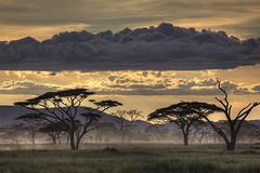 Photo by Amnon Eichelberg (HumanTheme.com) Tags: africa trees sunset beautiful fog clouds sunrise landscape photography safari photostory canoneos50d humantheme amnoneichelberg