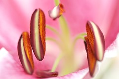 Pleasant acquaintance (V. Sharma) Tags: pink wallpaper flower macro fun cool nice nikon friend soft shoot blossom sweet fine social civil bland bloom buds contact welcome amusing jolly lovely charming cheerful companion acquaintance delectable refreshing germ spark colleague fineanddandy pleasant gracious polite association embryo delightful homey sympathetic urbane jovial diplomatic nucleus mild amiable associate enjoyable cordial genial engaging enchanting civilized pleasurable floret obliging pleasing copacetic agreeable satisfying kindly convivial mildmannered affable goodhumored likable gratifying congenial vishalsharma pleasantacquaintance incipientflower