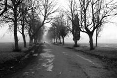 Platt Fields (kh1234567890) Tags: park trees winter fog pentax path hp5 ilford plattfields k7 da21 smcpda21mmf32al truegrain 21mmlimited smcpentaxda21mmf32allimited