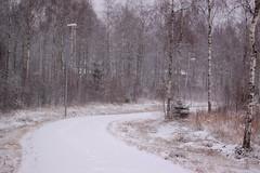 .9784 (J-Andersson) Tags: road trees winter snow walking woods sweden path walk snowing