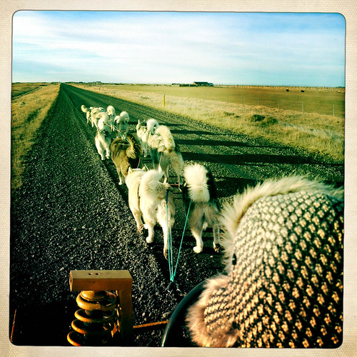 Anya drives dogsled
