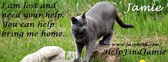 I Am Lost (Jamie's Team) Tags: cat lost lostcat wwwfacebookcomhelpfindjamie
