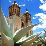 7 - église et plante