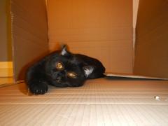 Tired (Ottmar H.) Tags: cat chat gato katze macska  kater  tomcat