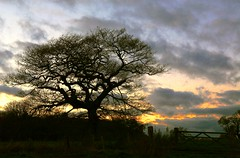 Late evening shilouetted tree and sky (Call_Me_Wade) Tags: sunset shadow tree fence evening warm cheshire fields shilouette