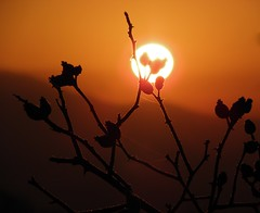 Oh what a beautiful morning! (rockwolf) Tags: sun cold sunrise frost shropshire freezing rosehips risingsun wrekin ohwhatabeautifulmorning rockwolf