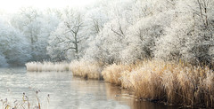 Wake-valley-pond_6450-2 (Peter Warne-Epping Forest) Tags: uk winter ice nature canon landscape eos eppingforest frozen frost freezing 7d essex fantasticnature hoarefrost wakevalley