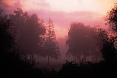(m.tones) Tags: morning autumn trees red sky mist crimson fog forest sunrise d50 woods nikon