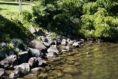2016 vacation-4017.jpg (alwendel) Tags: 2016vacation columbiariver sacajawiastatepark snakeriver washington landscape park river swimming pasco unitedstates