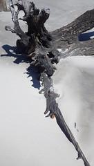 The Main Attraction, Jekyll Island, GA - IMGP4644 (catchesthelight) Tags: driftwoodbeach georgiasmostcompellingbeaches jekyllislandga barrierisland oneofthemostinterestingshorelines whitesand oaktrees driftwood gnarly naturalgraveyard preservation beauty light shadow texture