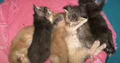 My moms kittens are 3 weeks old today! via http://ift.tt/29KELz0 (dozhub) Tags: cat kitty kitten cute funny aww adorable cats
