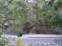 (Psinthos.Net) Tags:  psinthos september    autumn nature  treebranches   trees leaves     valley psinthosvalley planetrees planetree      treetrunks purpletree      vrisiarea vrisipsinthos vrisi fallenleaves waterfall     railings sidewalk pavement    rock flowers    purpleflowers purpleblossoms blossoms   pinkblossoms pinkflowers   acacia road     noon