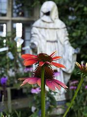 The ghost in the garden (ORIONSM) Tags: garden flower ghost spectre phantom nature petals bokeh olympus omdm10 abbeygardens malmesbury