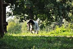 Freedom (Beata*) Tags: dog freedom pet animal